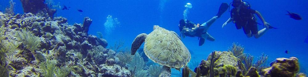 thailand duiken